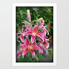 Star Lilies Art Print