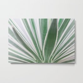 Aloe Stripes - Botanical Photography Metal Print