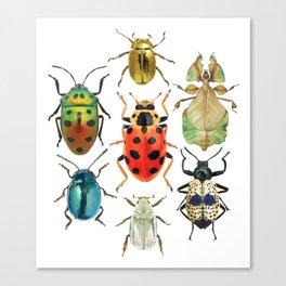 Beetle Compilation Canvas Print