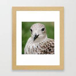 Teen Gull  Framed Art Print