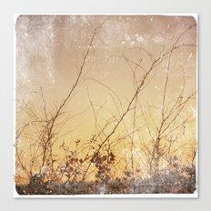 sea plants (gold) Canvas Print
