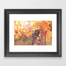 Fall Grapes Framed Art Print