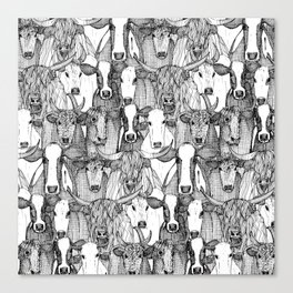 just cattle black white Canvas Print