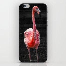 Flamingo. iPhone Skin