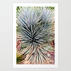 Arizona Desert Botanical Gardens Art Print