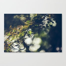 Leaves in sunlight Canvas Print