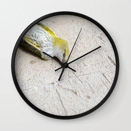Eurasian golden oriole dead bird Wall Clock