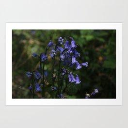 Bluebells Art Print