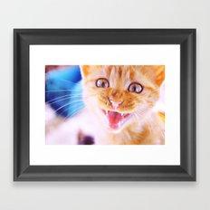 Angry cat Framed Art Print