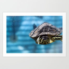 Mr. Chompers the Turtle Art Print