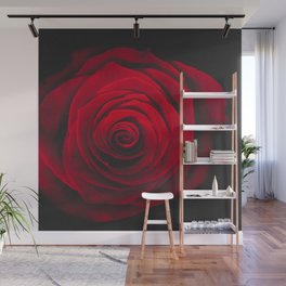 Red rose on black background vintage effect Wall Mural