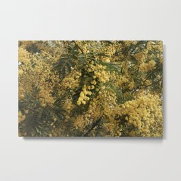 Nature marvels us with simple things Metal Print