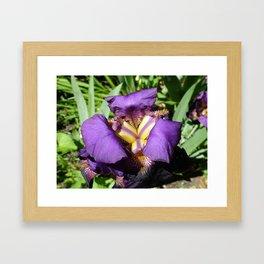 Flower pic 7 Framed Art Print