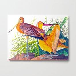 Great Marbled Godwit Bird Metal Print