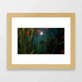 acvarium - red fish Framed Art Print