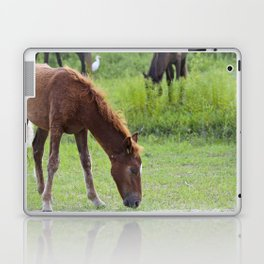 Wild Spanish mustang colt Laptop & iPad Skin