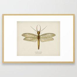 Eastern dobsonfly (Corydalus cornutus) illustrated by Charles Dessalines D' Orbigny (1806-1876) 3 Framed Art Print