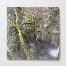 INTO THE WILD / Oregon Metal Print