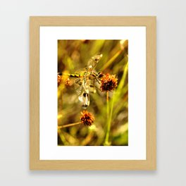 Black-tailed Skimmer Dragonfly Framed Art Print