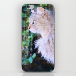 Cat to Dream With iPhone Skin