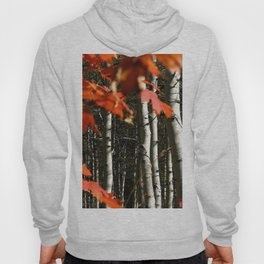 Image USA Leaf Colorado Maple Birch Nature Autumn  Hoody