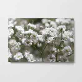 Babys Breath White Flower Photography Metal Print