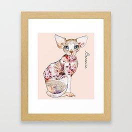 Berenice the sphynx Framed Art Print