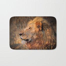 Lion in the evening light, South Africa Bath Mat