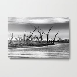 Dying Cypress Trees, Louisiana Metal Print