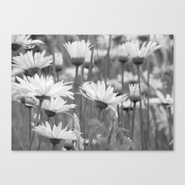 Among the Daisies Canvas Print
