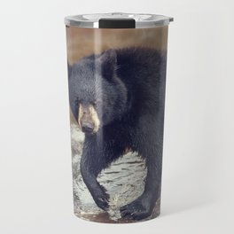 Young black bear in a pond Travel Mug