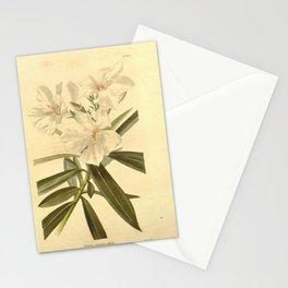 Flower nerium oleander album26 Stationery Cards