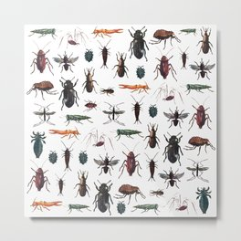 Color Insects Pattern Metal Print