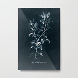 Cyanotype - Camphora Officinalis Metal Print