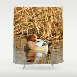 Eurasian Wigeon at the Pond Shower Curtain