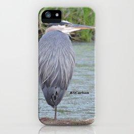 Blue Heron at Hillsboro Pond iPhone Case