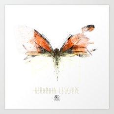 Butter flies - Hebomoia_Leucippe Art Print
