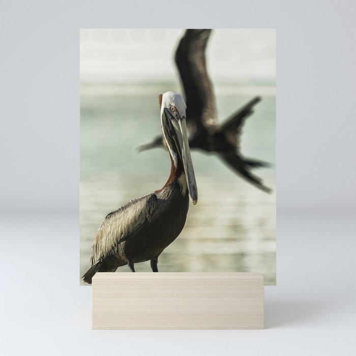 Pelican Photobombed by a Frigatebird Mini Art Print