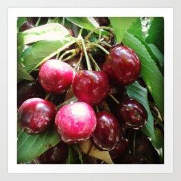 Cherrys Art Print