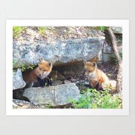 fox 2018-5 Art Print