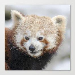 Red Panda 2 Canvas Print