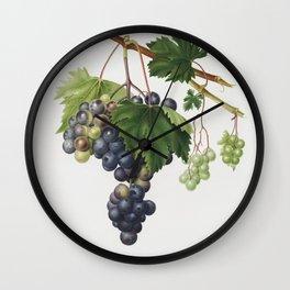 Vineyard Grape by Giorgio Gallesio (1772-1839) catalysisculture Wall Clock