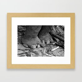 Elephant Feet Framed Art Print
