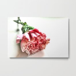 A Single Carnation Metal Print