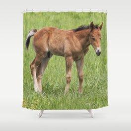 Little Colt Shower Curtain