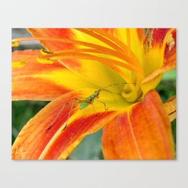 Into the Lilly Canvas Print