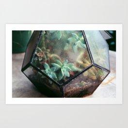 Succulent No.2 Art Print