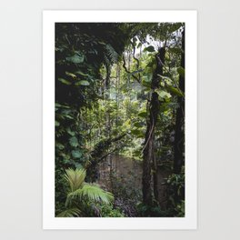 Hidden Jungle River Art Print