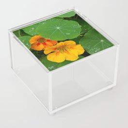Umbrellas Acrylic Box