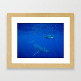 Underwater Humpbacks 5 Framed Art Print